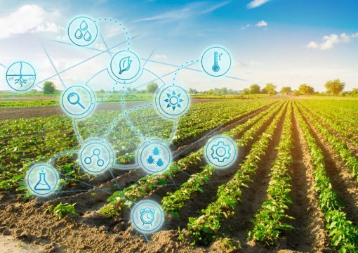 Agricultura de precisão com a Internet das Coisas
